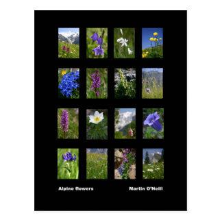Alpine flowers postcard
