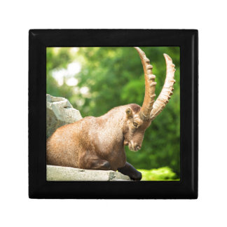 Alpine Goat Takes A Break From Climbing Small Square Gift Box