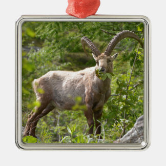 Alpine ibex eating leaves metal ornament