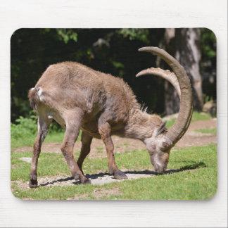 Alpine ibex grazing mouse pad