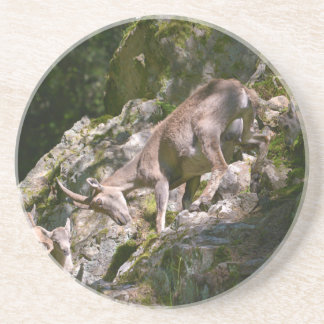 Alpine ibex in the mountain coaster
