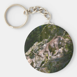 Alpine ibex in the mountain key ring