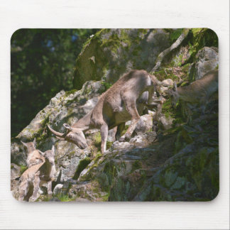 Alpine ibex in the mountain mouse pad