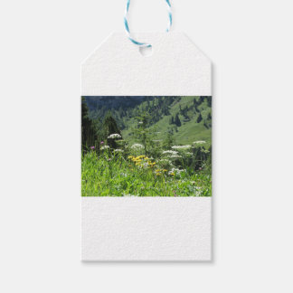 Alpine landscape with wildflowers and firs gift tags
