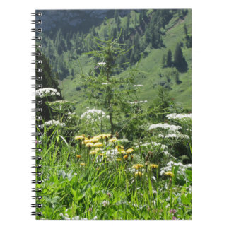 Alpine landscape with wildflowers and firs notebooks