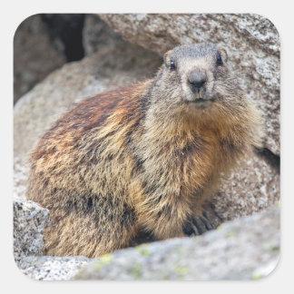 Alpine Marmot Sticker