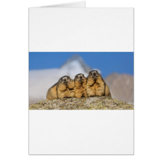Alpine Marmots Card