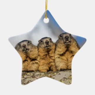 Alpine Marmots Ceramic Ornament
