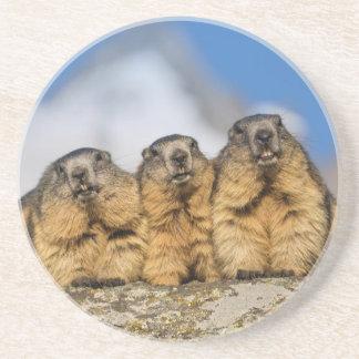 Alpine Marmots Coaster