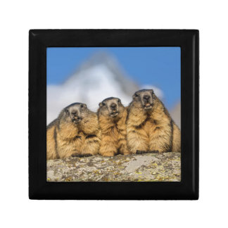 Alpine Marmots Gift Box