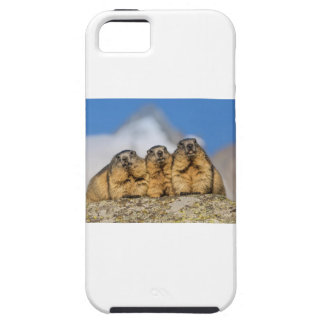 Alpine Marmots iPhone 5 Case