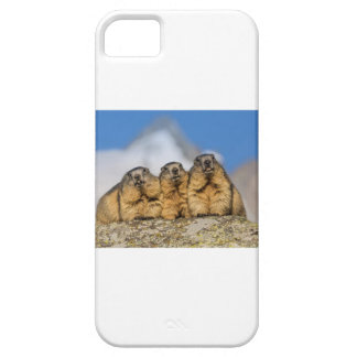 Alpine Marmots iPhone 5 Cases