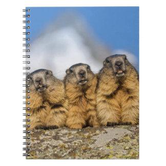 Alpine Marmots Spiral Notebook