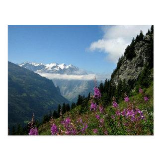 Alps - Switzerland Postcard