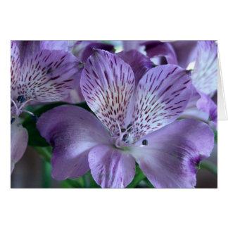 Alstroemeria Lily Blank Card