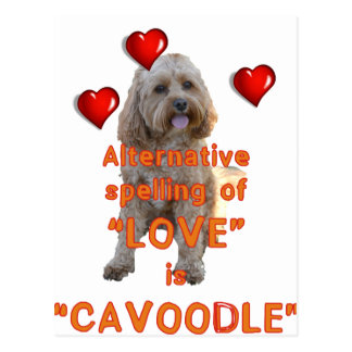 alternative spelling of LOVE is CAVOODLE Postcard