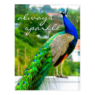 """""""Always sparkle"""" quote blue green peacock photo Postcard"""