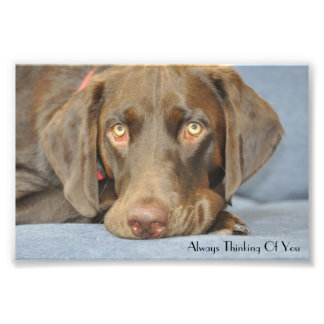 Always thinking of you photographic print