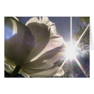 always toward the sunshine card