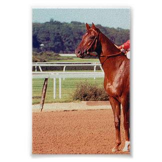 Alydar Belmont Stakes Post Parade 1978 Photo