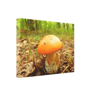 Amanita Caesarea Mushroom Canvas Print