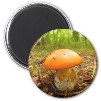 Amanita Caesarea Mushroom Magnet