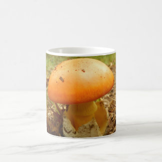 Amanita Caesarea Mushroom Mug