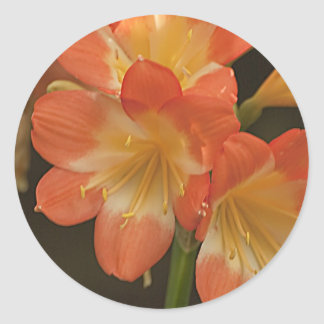 Amaryllis 2 classic round sticker