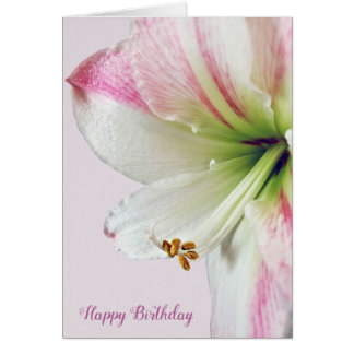 amaryllis birthday macro card