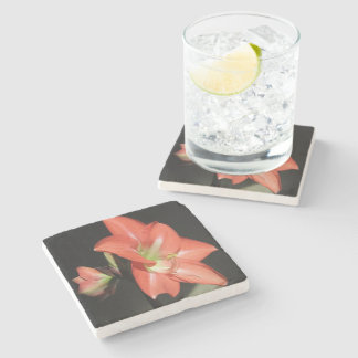 Amaryllis Hippeastrum Flowers Isolated On Black Stone Coaster