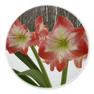 Amaryllis in Snow I Red Holiday Winter Floral Ceramic Knob