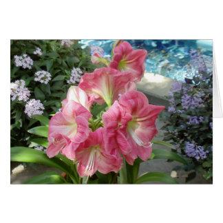 Amaryllis, National Botanic Garden, Washington, DC Card