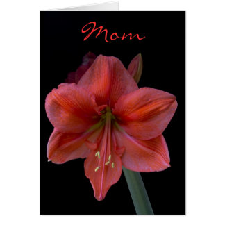Amaryllis on Black Mother's Day Card