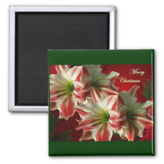 Amaryllis Pair Christmas Magnet