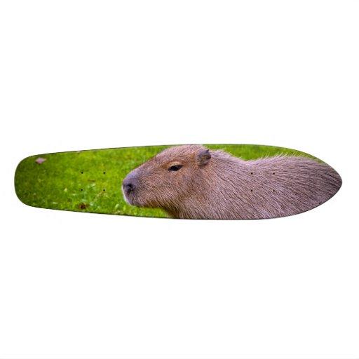 Amazing Animal Capybara Skate Board