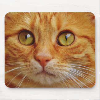amazing cat close up mouse pad