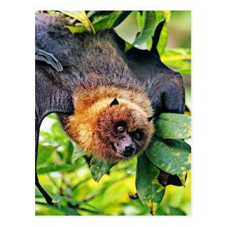 amazing Flight dog - bat Postcard