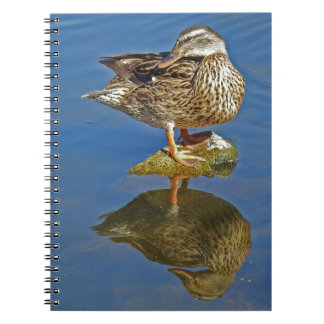 Amazing Mallard Hen Duck Reflection Notebooks