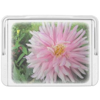 Amazing Pink Dahlia Flower Cooler