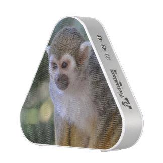 Amazing Squirrel Monkey