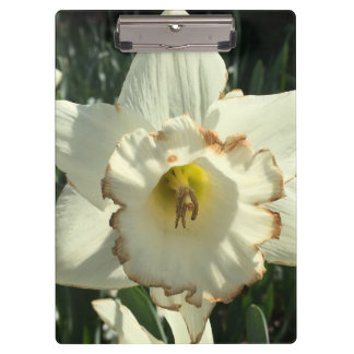 Amazing White Daffodil Clipboard