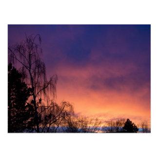 Amazing Winter Dawn Postcard