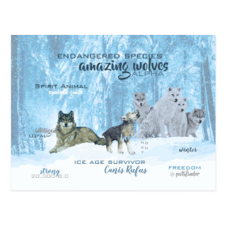 Amazing Wolves Typography   Personalized Postcard