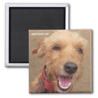 Amazon Humane Society Magnet: Precious Dog Series- Square Magnet