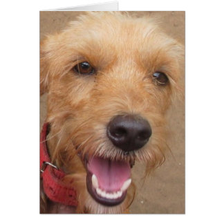 "Amazon Humane Society ""Pedro"" Note Card"