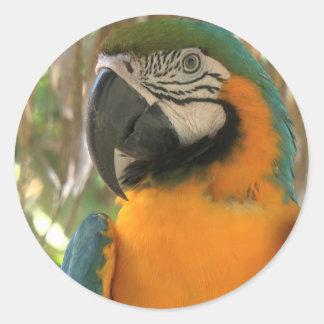 Amazon macaw sticker