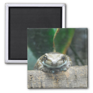 Amazon Milk Frog Magnet Magnets