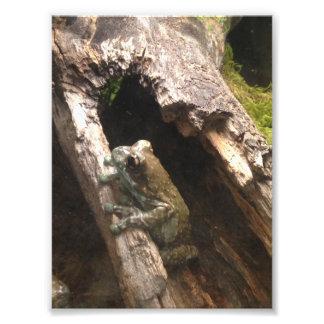 Amazon Milk Frog Photo Print