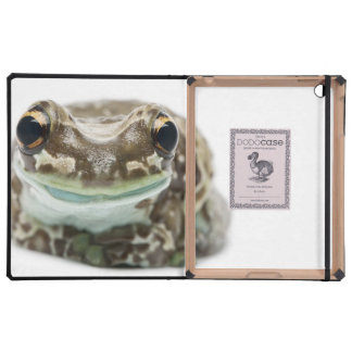 Amazon Milk Frog - Trachycephalus Resinifictrix Covers For iPad