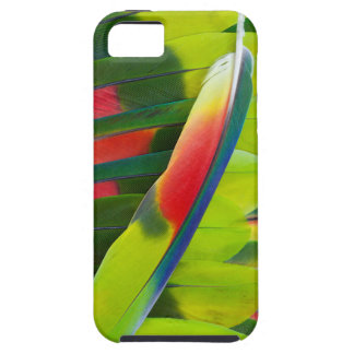 Amazon Parrot Feather Still Life iPhone 5 Cases